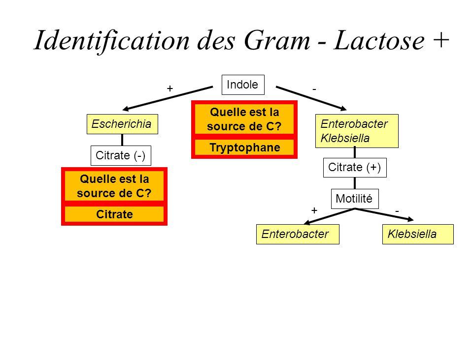 Identification des Gram - Lactose +