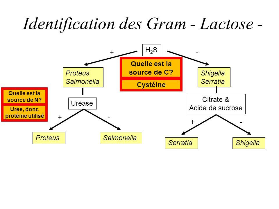 Identification des Gram - Lactose -