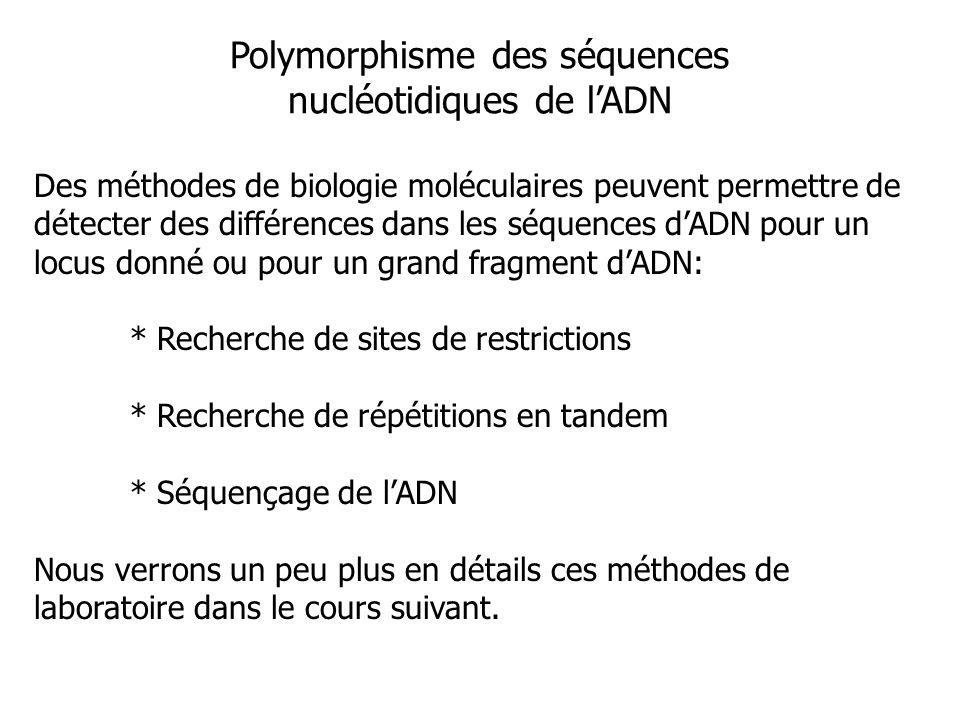 Polymorphisme des séquences nucléotidiques de l'ADN