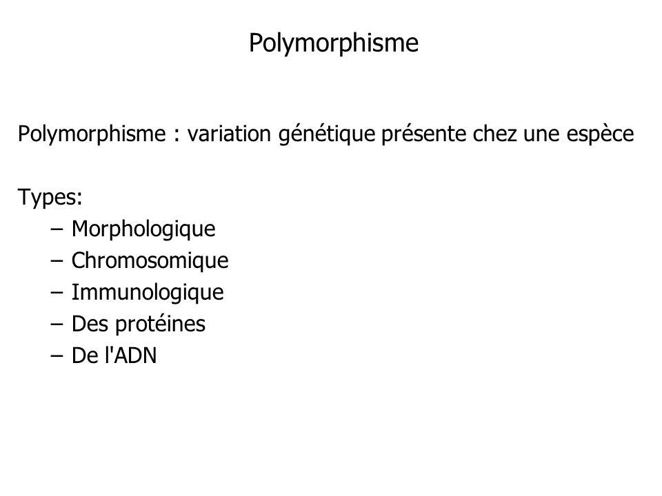 Polymorphisme Polymorphisme : variation génétique présente chez une espèce. Types: Morphologique.