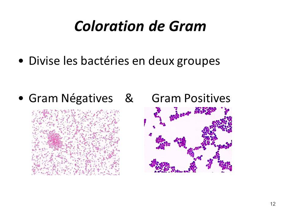 Coloration de Gram Divise les bactéries en deux groupes