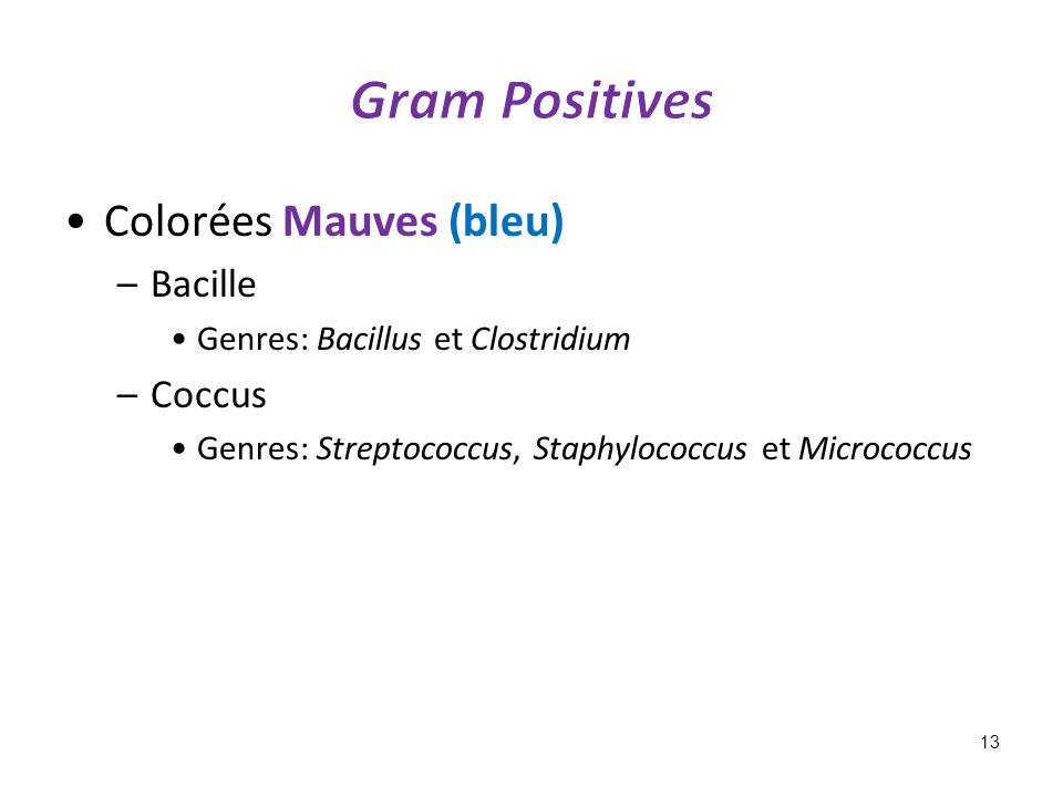 Gram Positives Colorées Mauves (bleu) Bacille Coccus