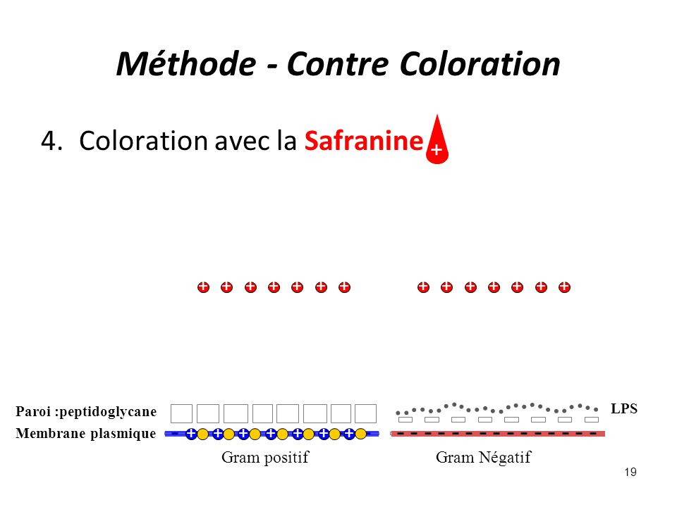 Méthode - Contre Coloration