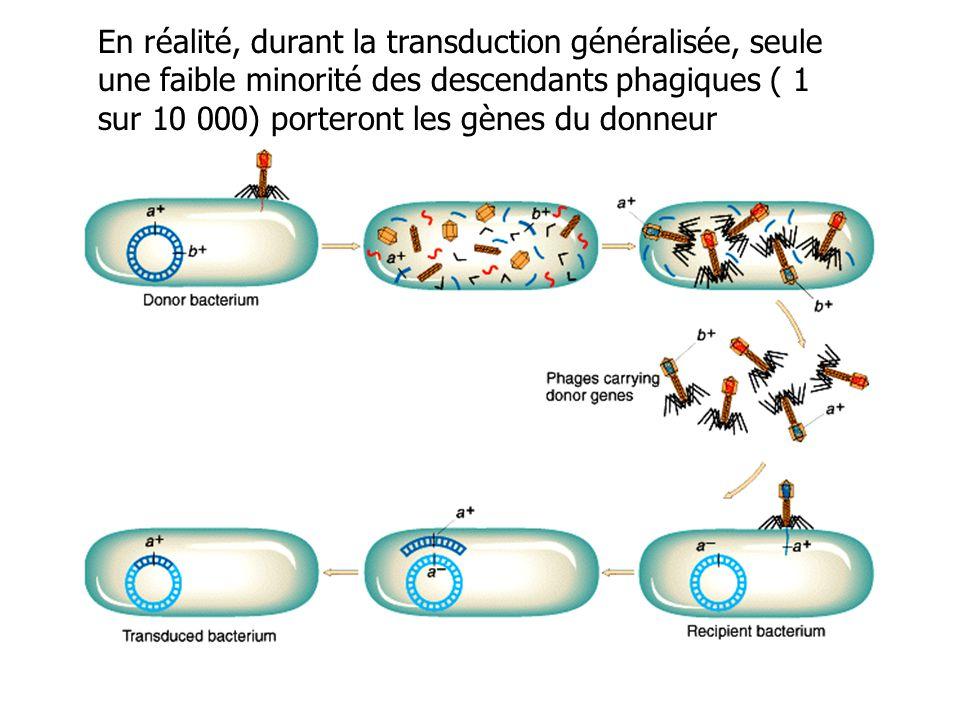 En réalité, durant la transduction généralisée, seule une faible minorité des descendants phagiques ( 1 sur 10 000) porteront les gènes du donneur
