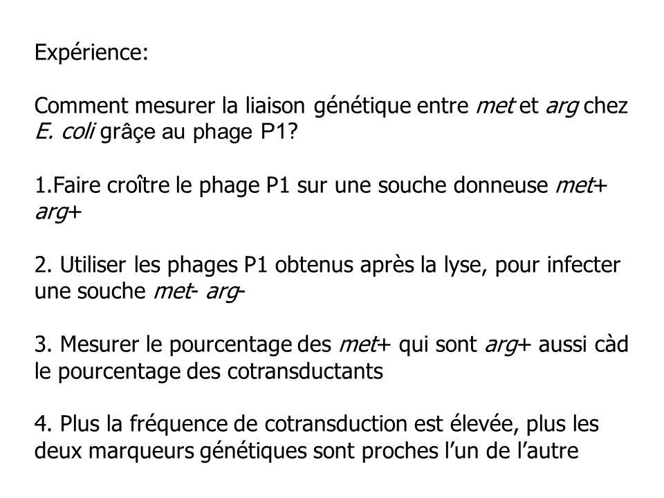 Expérience: Comment mesurer la liaison génétique entre met et arg chez E. coli grâçe au phage P1