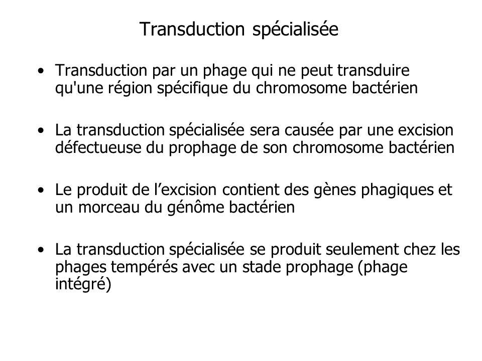 Transduction spécialisée