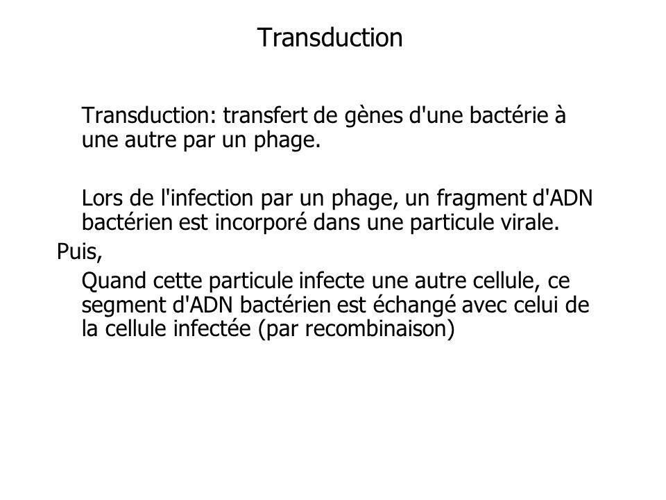 Transduction Transduction: transfert de gènes d une bactérie à une autre par un phage.