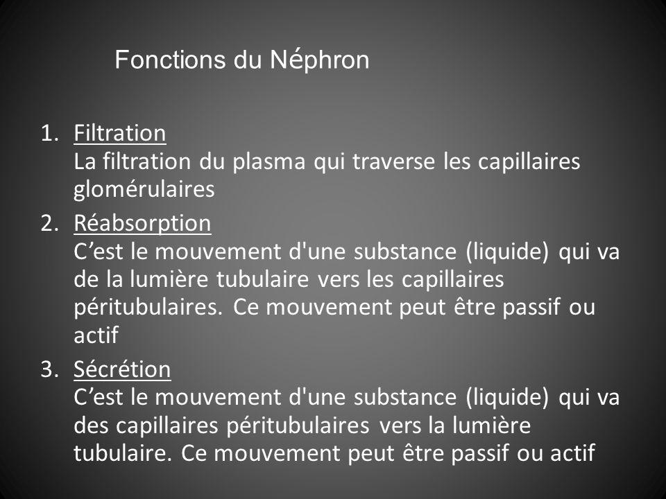 Fonctions du Néphron Filtration La filtration du plasma qui traverse les capillaires glomérulaires.