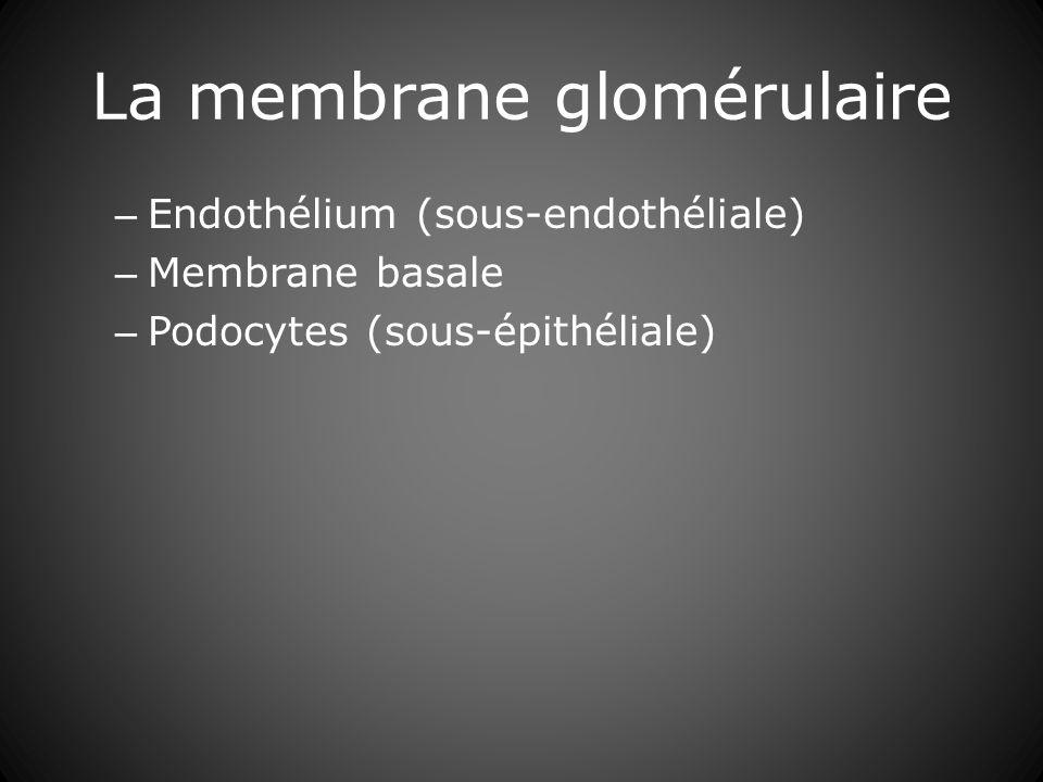 La membrane glomérulaire