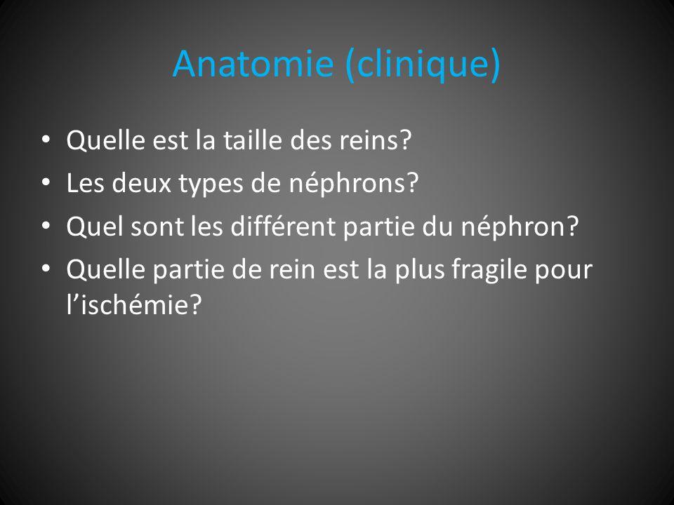 Anatomie (clinique) Quelle est la taille des reins