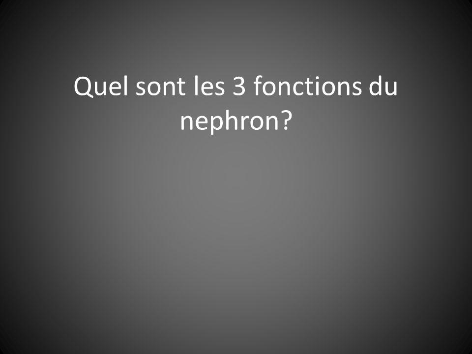 Quel sont les 3 fonctions du nephron