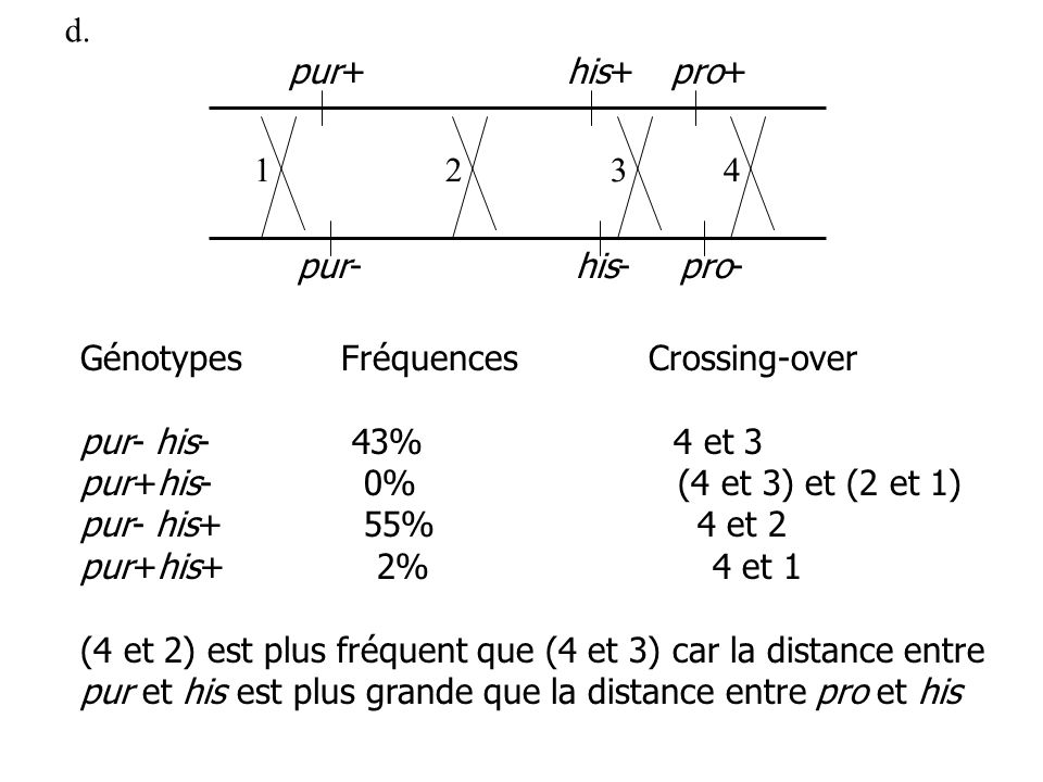 d. pur+ his+ pro+ 1. 2. 3. 4. pur- his- pro- Génotypes Fréquences Crossing-over. pur- his- 43% 4 et 3.