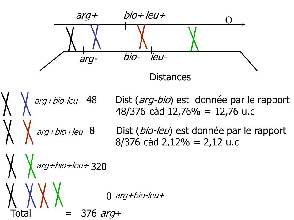 8 Dist (bio-leu) est donnée par le rapport 8/376 càd 2,12% = 2,12 u.c