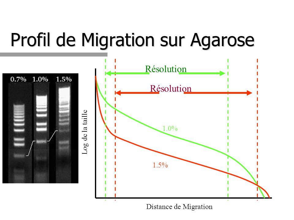 Profil de Migration sur Agarose