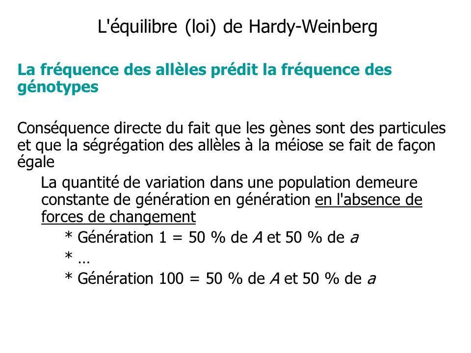 L équilibre (loi) de Hardy-Weinberg