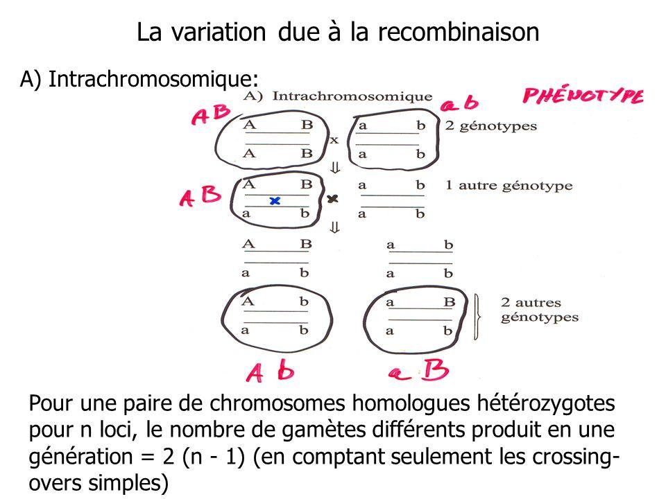 La variation due à la recombinaison