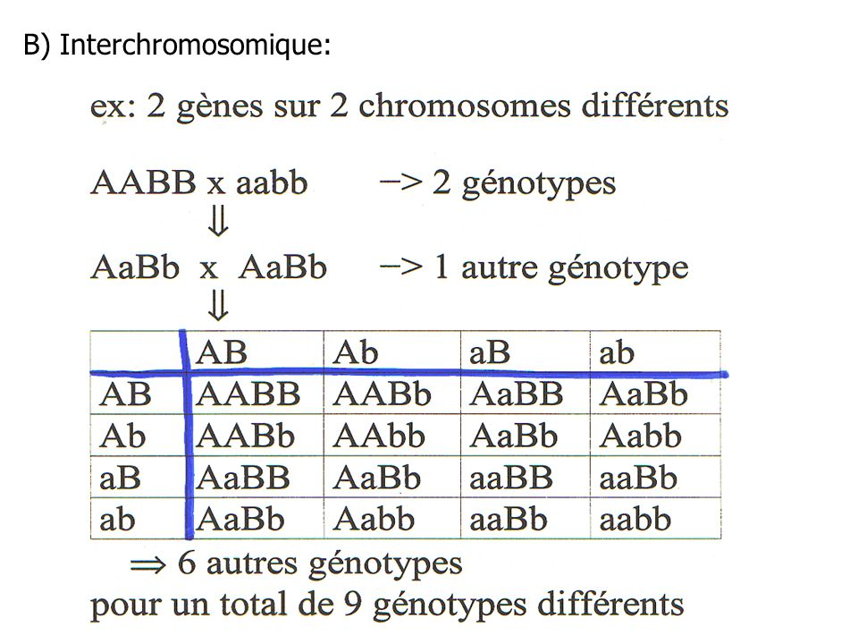 B) Interchromosomique: