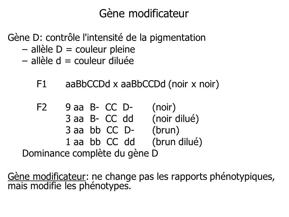 Gène modificateur Gène D: contrôle l intensité de la pigmentation