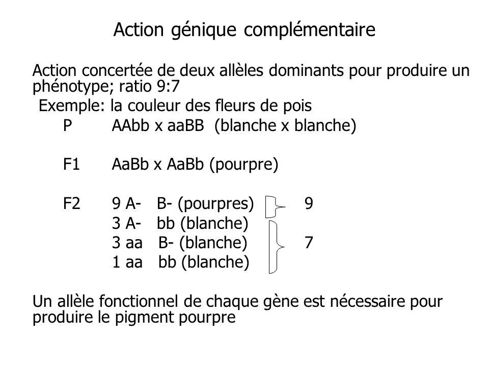 Action génique complémentaire