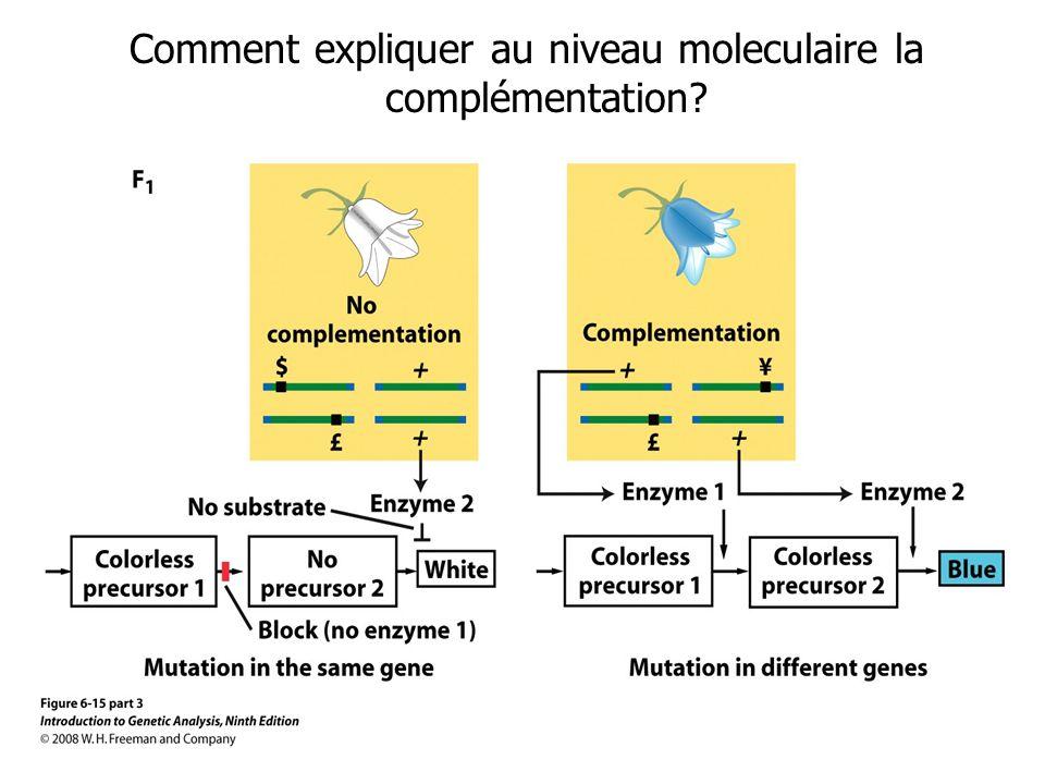 Comment expliquer au niveau moleculaire la complémentation
