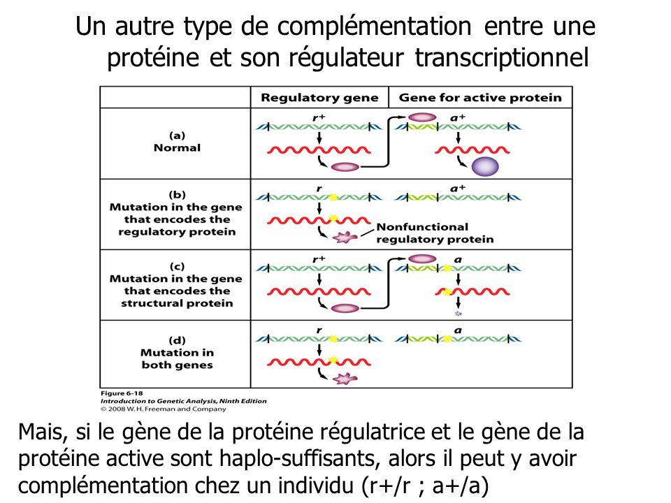 Un autre type de complémentation entre une protéine et son régulateur transcriptionnel