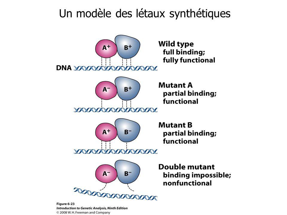 Un modèle des létaux synthétiques