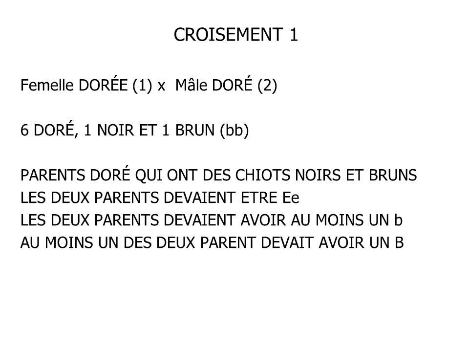 CROISEMENT 1 Femelle DORÉE (1) x Mâle DORÉ (2)