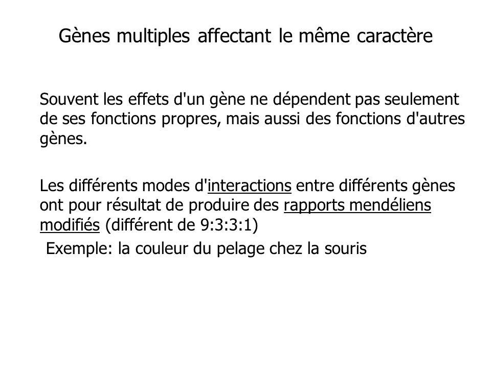Gènes multiples affectant le même caractère