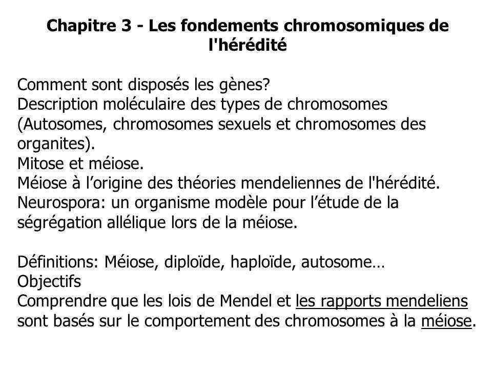 Chapitre 3 - Les fondements chromosomiques de l hérédité