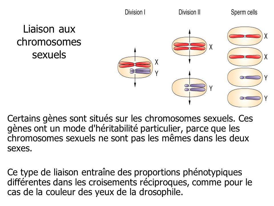 Liaison aux chromosomes sexuels