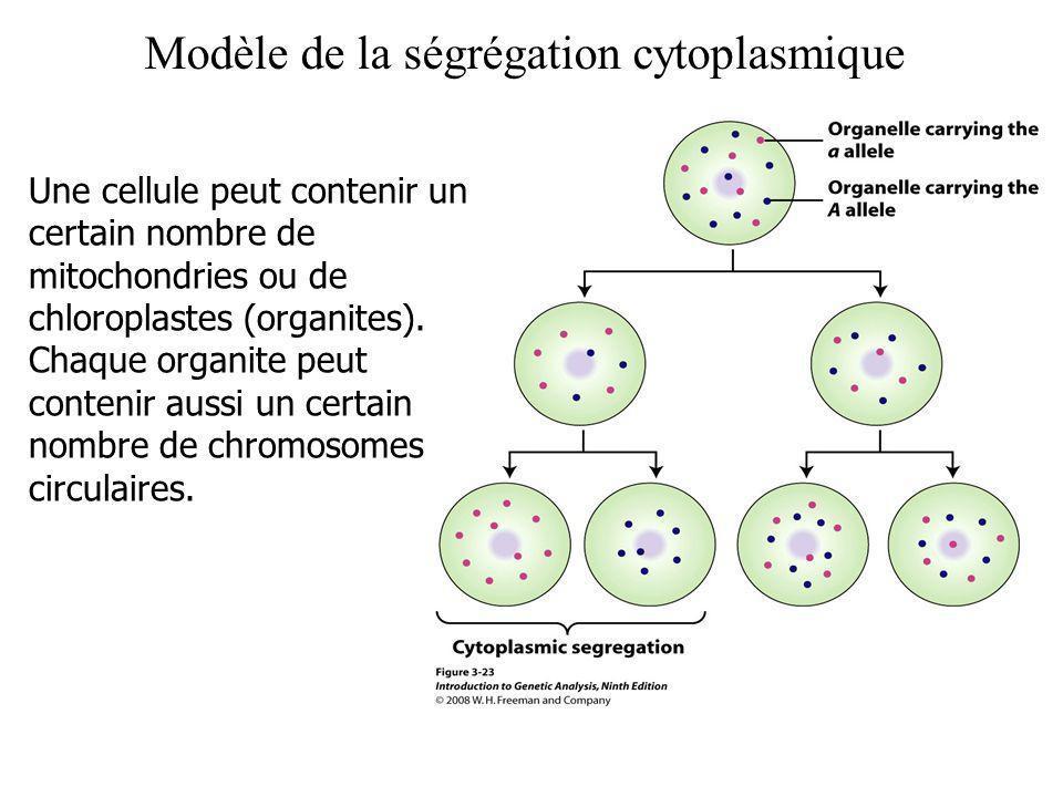 Modèle de la ségrégation cytoplasmique