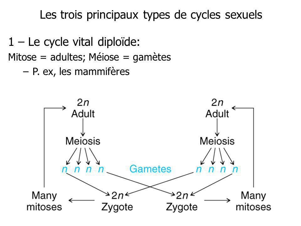 Les trois principaux types de cycles sexuels