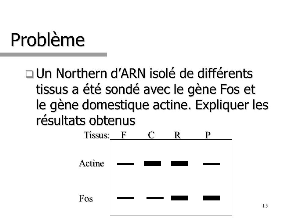 Problème Un Northern d'ARN isolé de différents tissus a été sondé avec le gène Fos et le gène domestique actine. Expliquer les résultats obtenus.