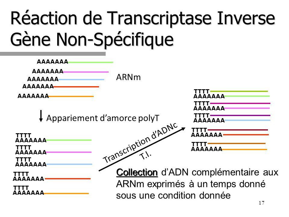 Réaction de Transcriptase Inverse Gène Non-Spécifique