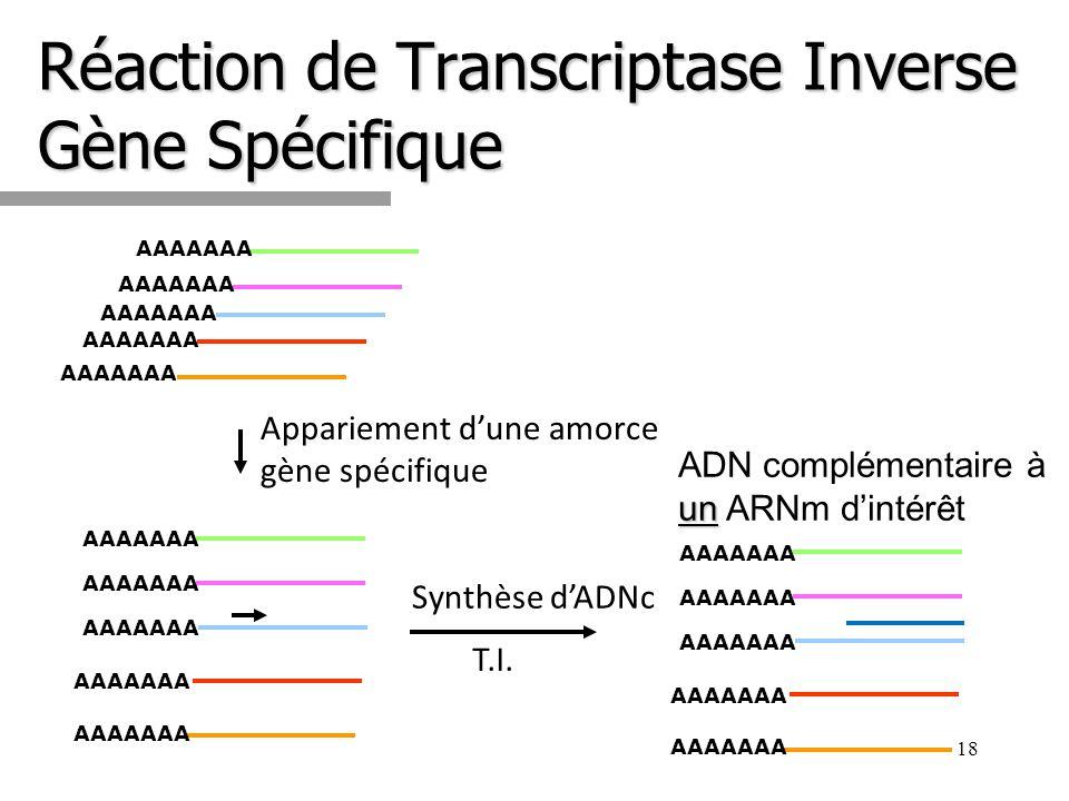 Réaction de Transcriptase Inverse Gène Spécifique