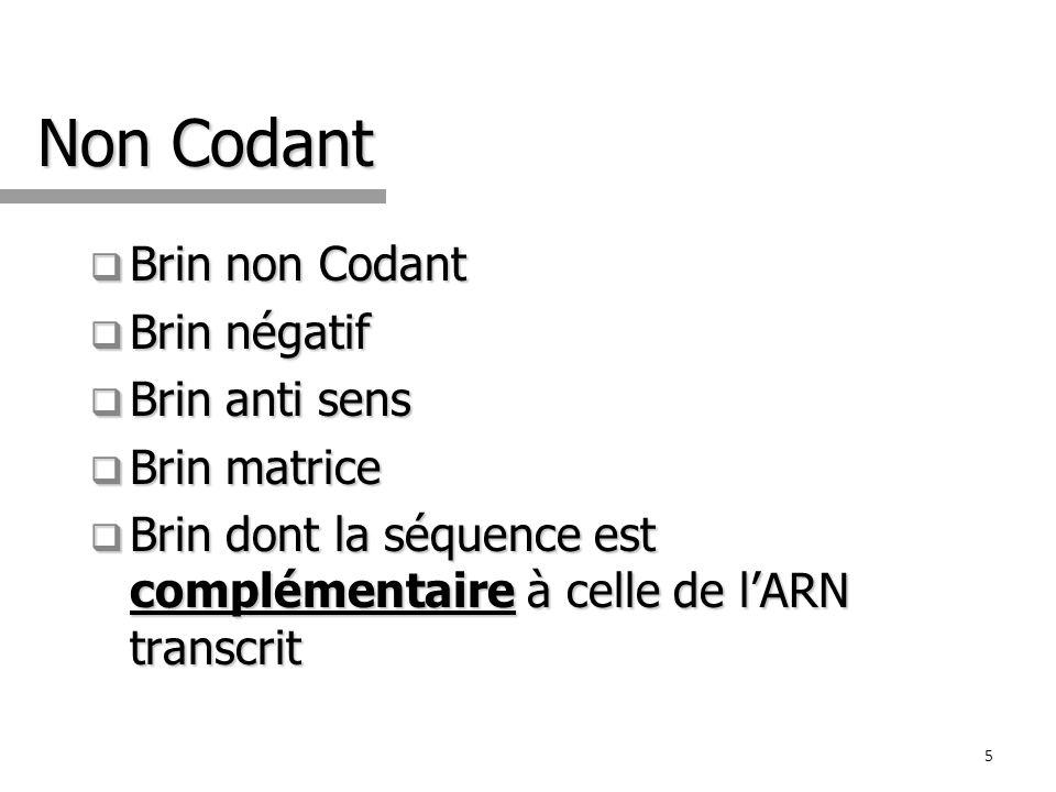 Non Codant Brin non Codant Brin négatif Brin anti sens Brin matrice