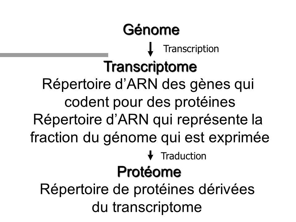 Répertoire d'ARN des gènes qui codent pour des protéines