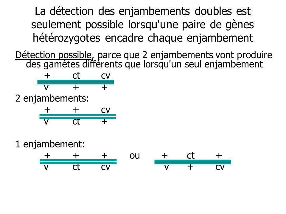 La détection des enjambements doubles est seulement possible lorsqu une paire de gènes hétérozygotes encadre chaque enjambement