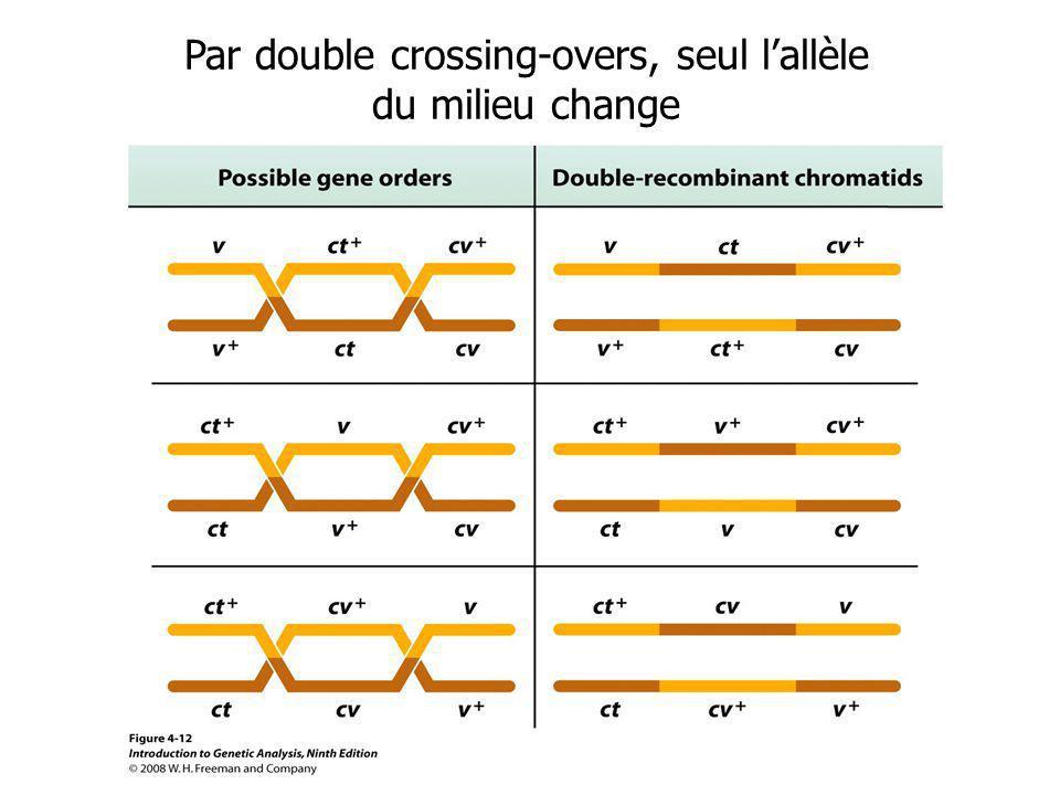 Par double crossing-overs, seul l'allèle du milieu change
