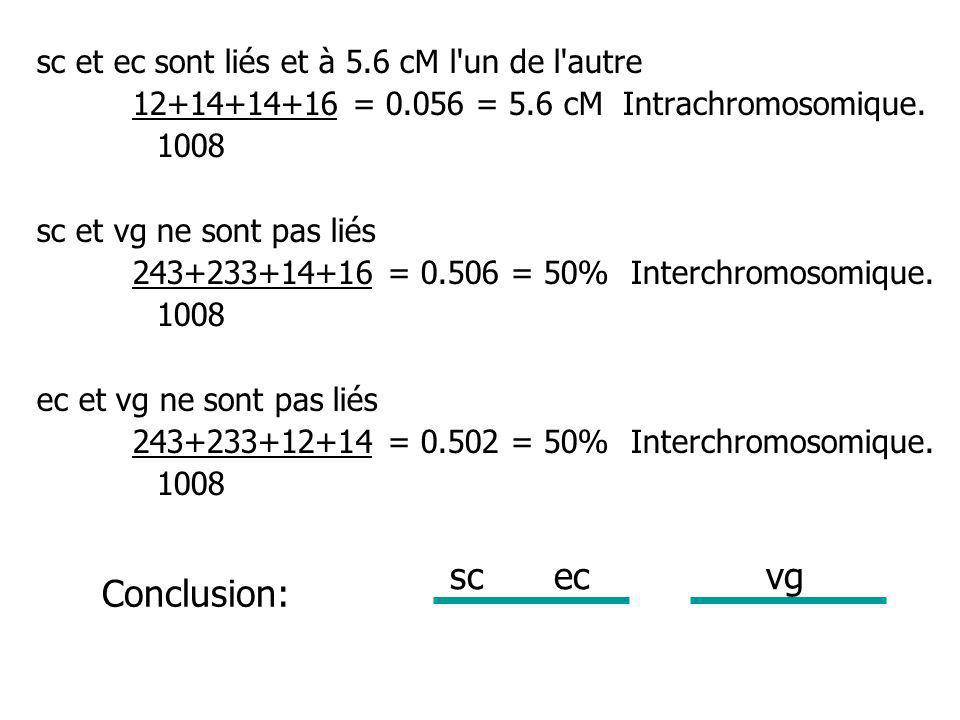 sc ec vg Conclusion: sc et ec sont liés et à 5.6 cM l un de l autre