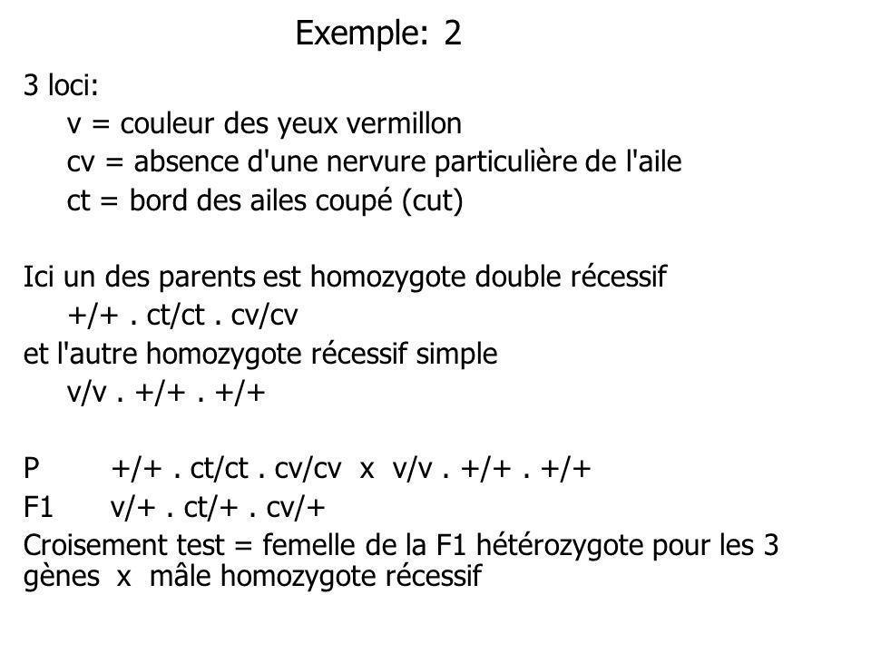 Exemple: 2 3 loci: v = couleur des yeux vermillon