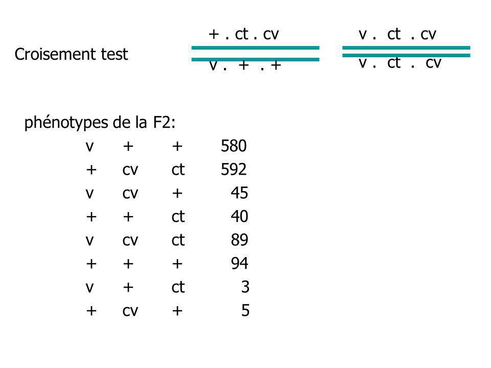 + . ct . cv v . ct . cv. Croisement test. v . + . + v . ct . cv. phénotypes de la F2: v + + 580.