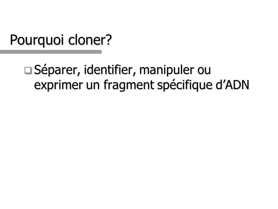 Pourquoi cloner Séparer, identifier, manipuler ou exprimer un fragment spécifique d'ADN 3