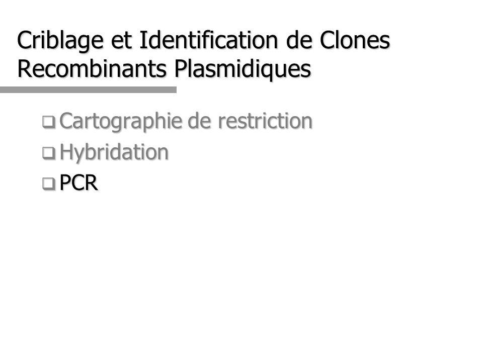 Criblage et Identification de Clones Recombinants Plasmidiques
