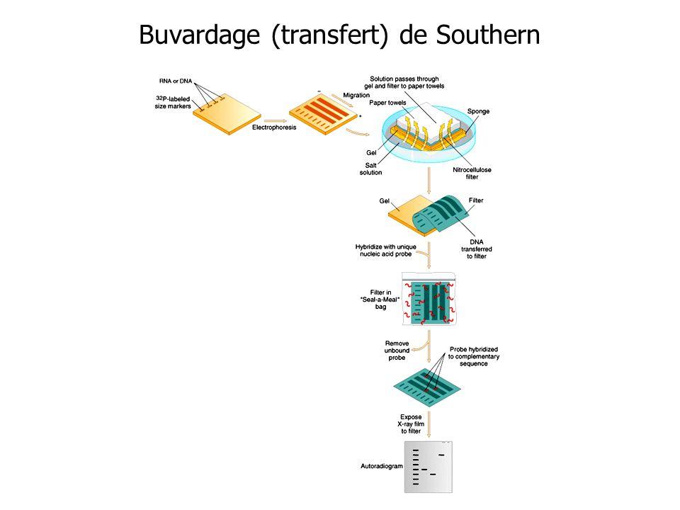 Buvardage (transfert) de Southern