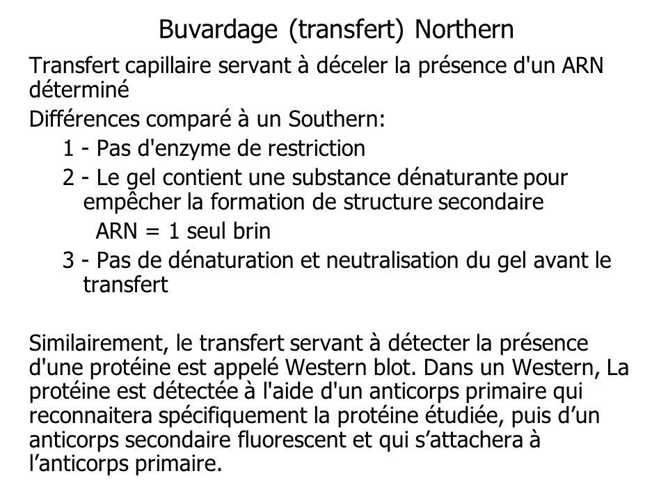 Buvardage (transfert) Northern