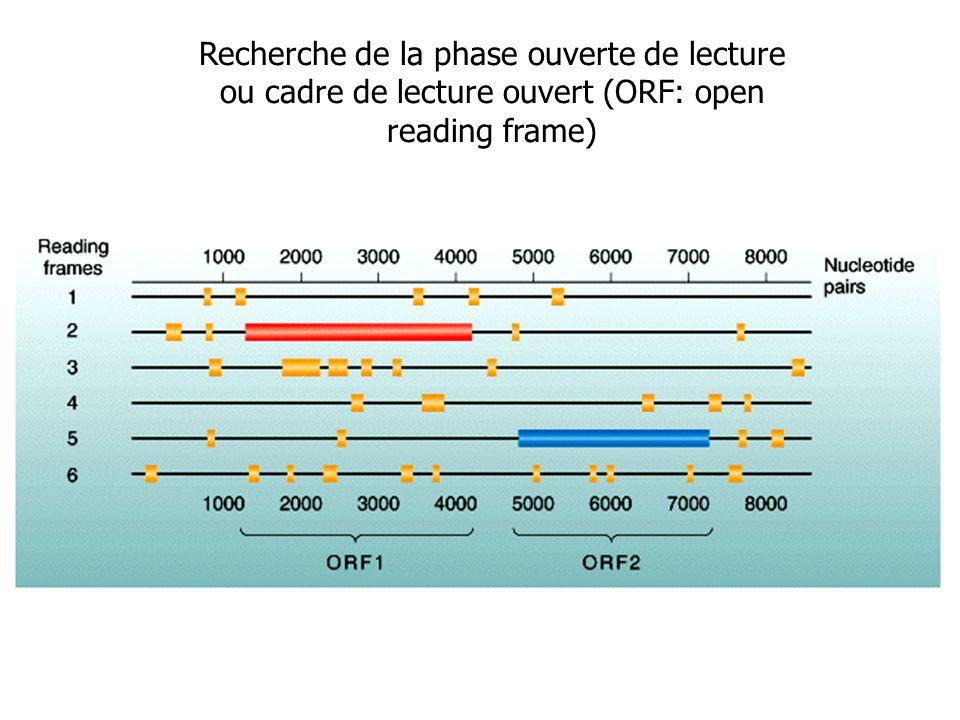 Recherche de la phase ouverte de lecture ou cadre de lecture ouvert (ORF: open reading frame)