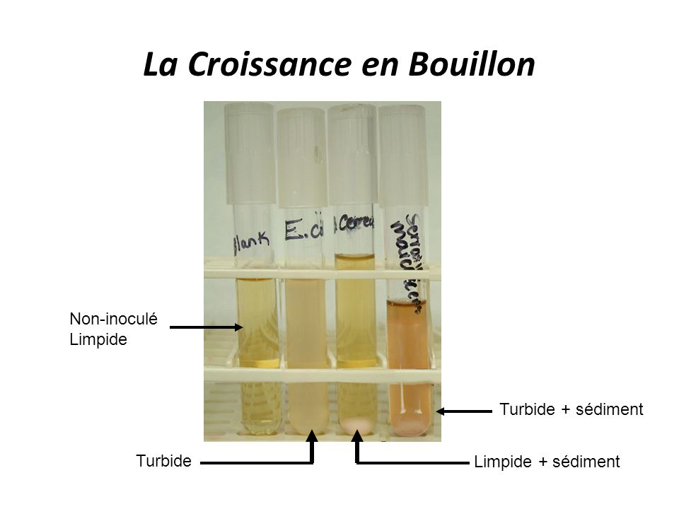 La Croissance en Bouillon
