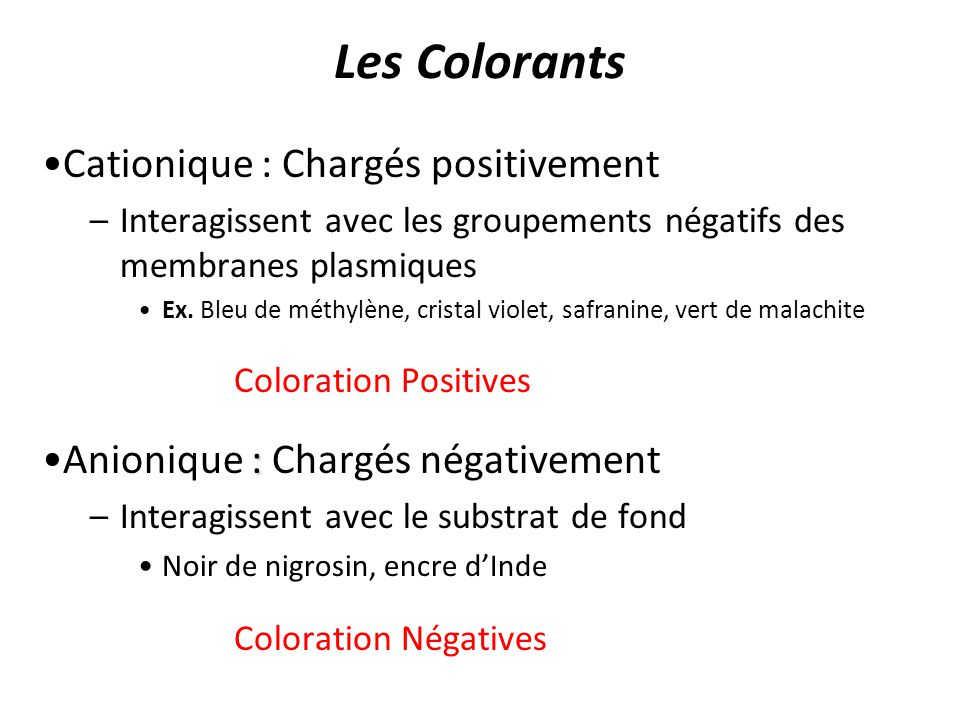 Les Colorants Cationique : Chargés positivement Coloration Positives