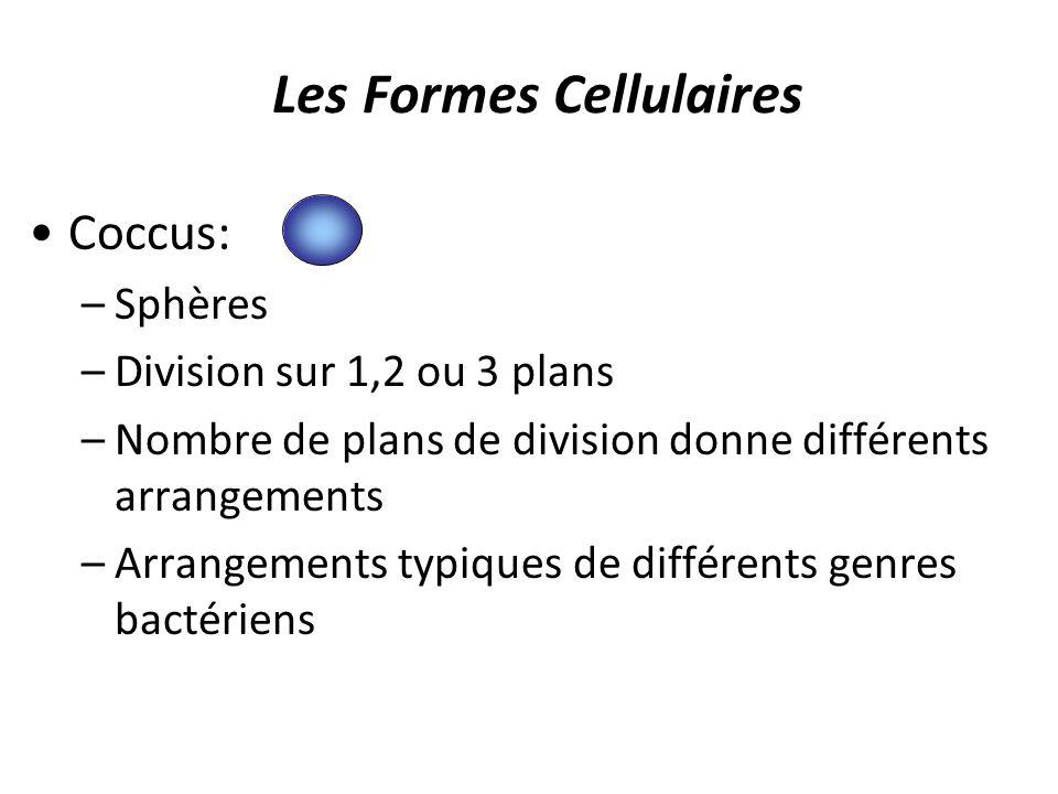 Les Formes Cellulaires